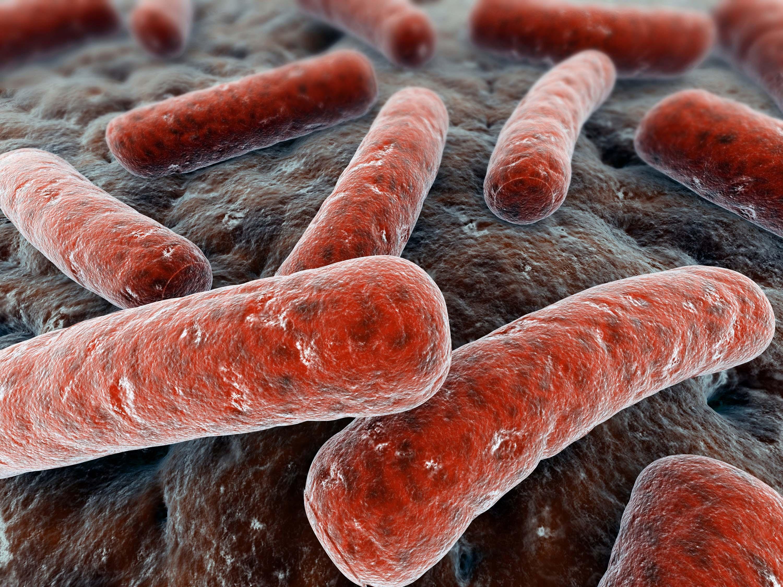 Mycobacterium_tuberculosis_14313982_1